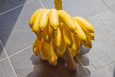 無農薬バナナ