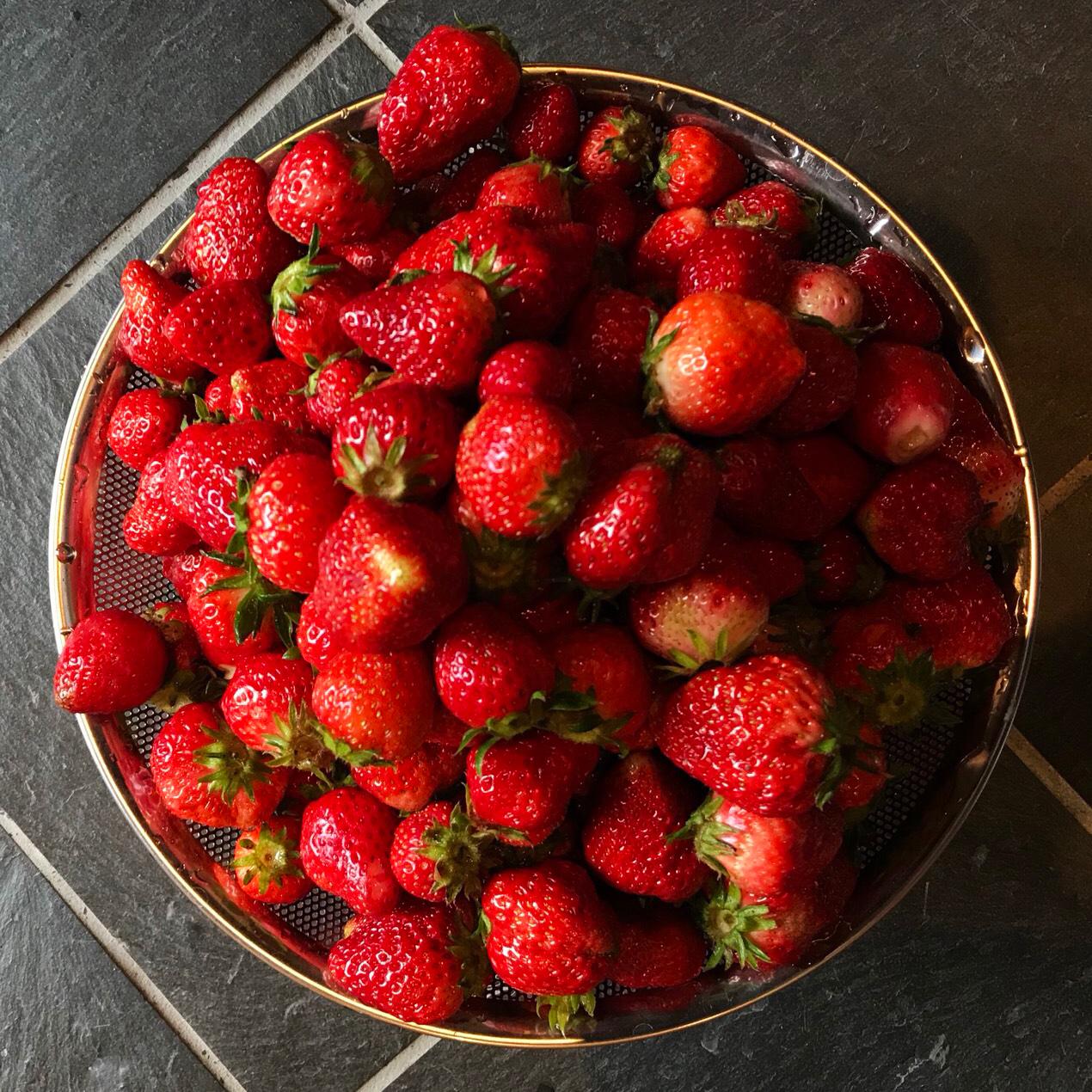 だいしん農園の無農薬イチゴ