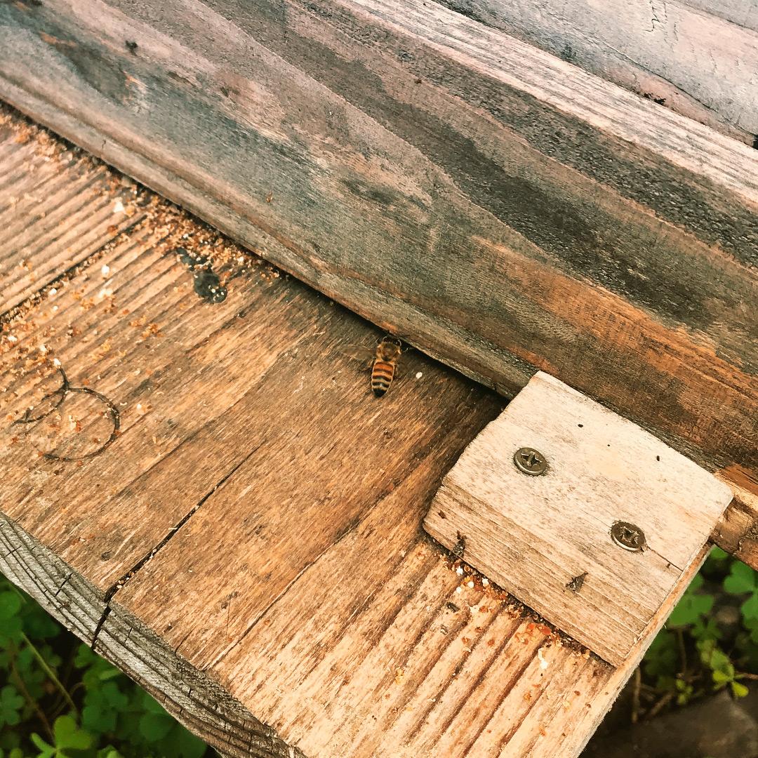 だいしん農園ミツバチ