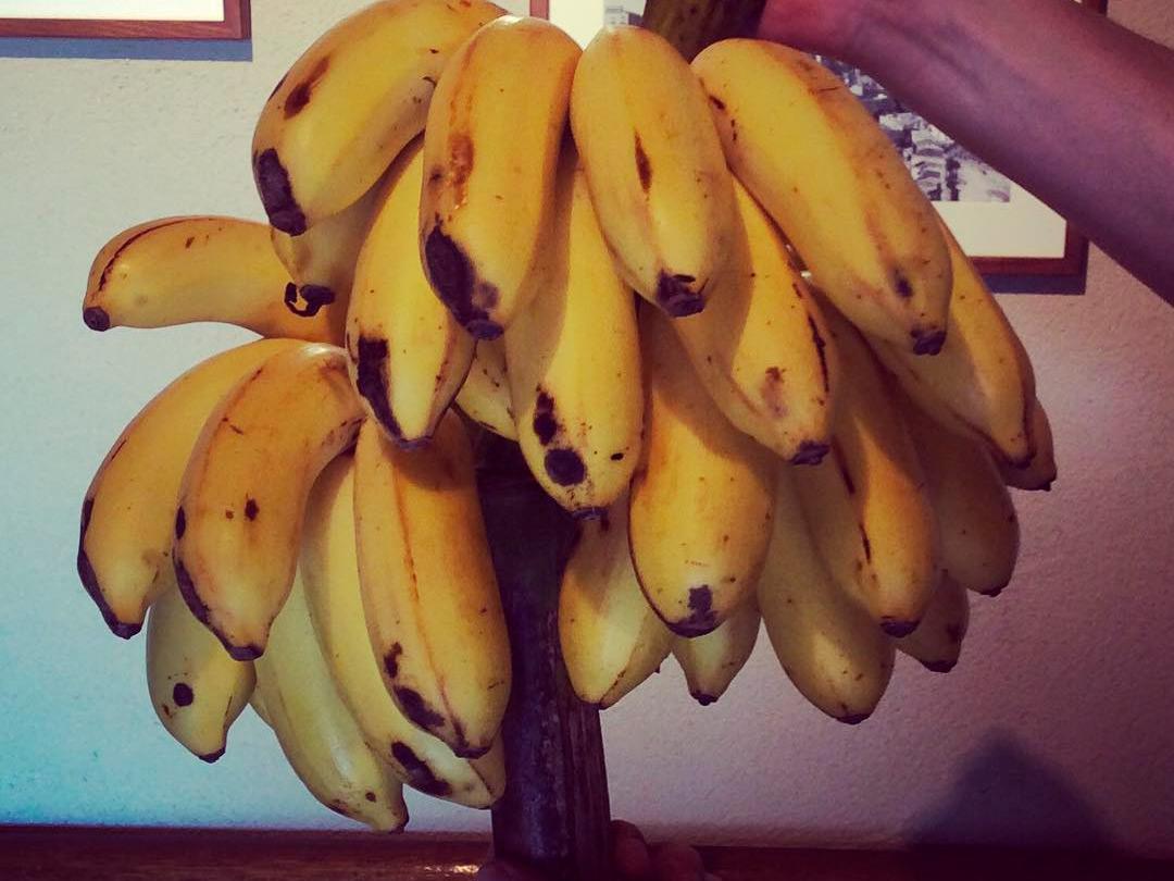 喜界島産オーガニック島バナナ