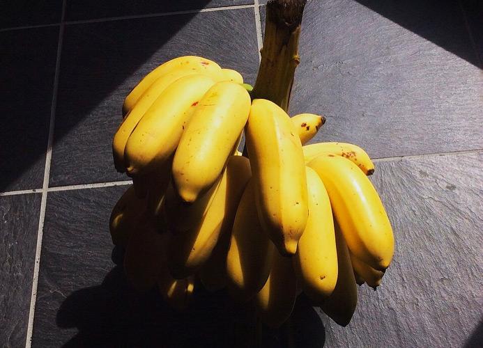 自然栽培の島バナナ