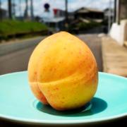 にしだ果樹園の黄桃のシャーベット