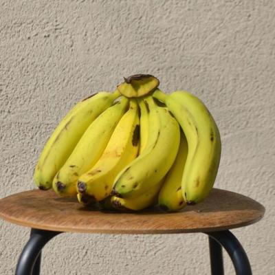 オーガニック島バナナのジェラート