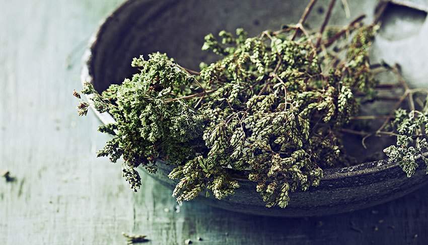 https://gelato-naturale.com/wp-content/uploads/2020/08/oregano-1.jpg