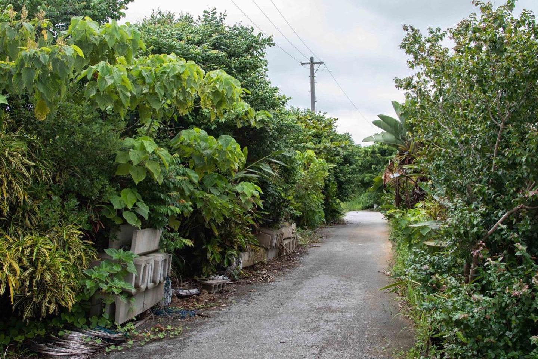 西表島のピーチパイン